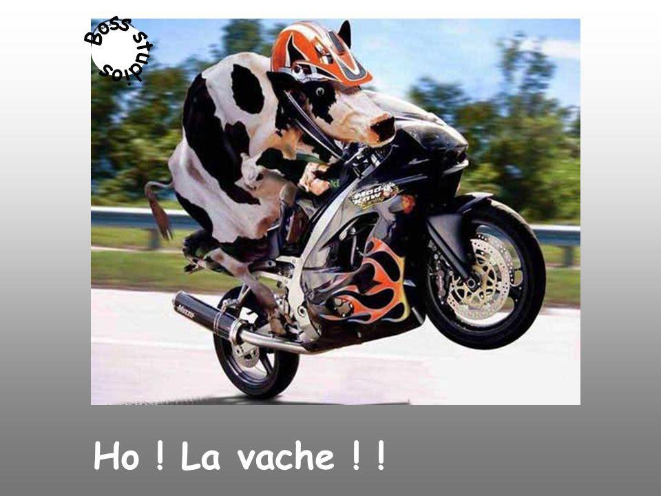 Ho ! La vache ! !