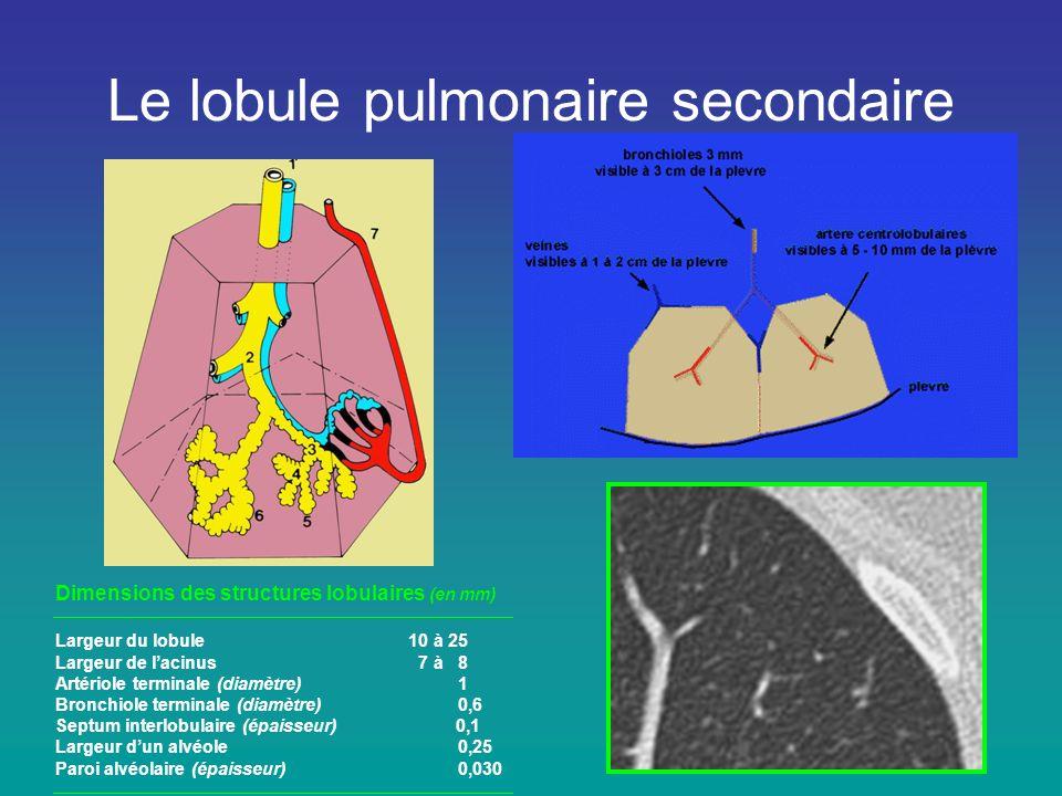 Le lobule pulmonaire secondaire Dimensions des structures lobulaires (en mm) Largeur du lobule 10 à 25 Largeur de l'acinus 7 à 8 Artériole terminale (
