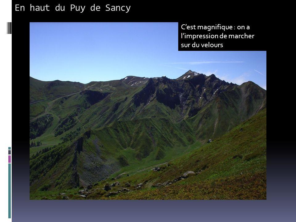En haut du Puy de Sancy C'est magnifique : on a l'impression de marcher sur du velours