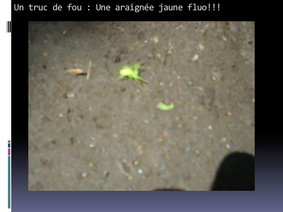 Un truc de fou : Une araignée jaune fluo!!!