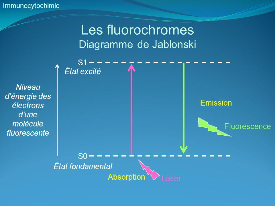 Les fluorochromes Diagramme de Jablonski Immunocytochimie S0 État fondamental S1 État excité Niveau d'énergie des électrons d'une molécule fluorescente Laser Absorption Fluorescence Emission