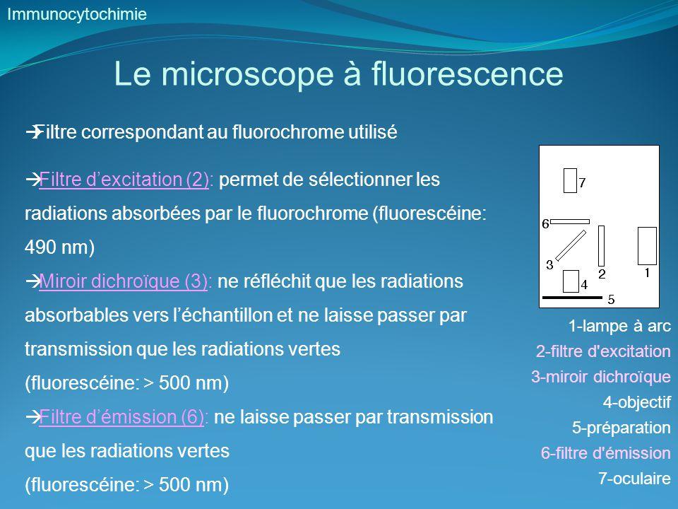 Le microscope à fluorescence Immunocytochimie  Filtre correspondant au fluorochrome utilisé  Filtre d'excitation (2): permet de sélectionner les radiations absorbées par le fluorochrome (fluorescéine: 490 nm)  Miroir dichroïque (3): ne réfléchit que les radiations absorbables vers l'échantillon et ne laisse passer par transmission que les radiations vertes (fluorescéine: > 500 nm)  Filtre d'émission (6): ne laisse passer par transmission que les radiations vertes (fluorescéine: > 500 nm) 1-lampe à arc 2-filtre d excitation 3-miroir dichroïque 4-objectif 5-préparation 6-filtre d émission 7-oculaire