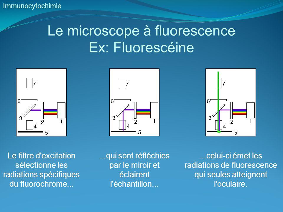 Le microscope à fluorescence Ex: Fluorescéine Immunocytochimie Le filtre d excitation sélectionne les radiations spécifiques du fluorochrome......qui sont réfléchies par le miroir et éclairent l échantillon......celui-ci émet les radiations de fluorescence qui seules atteignent l oculaire.