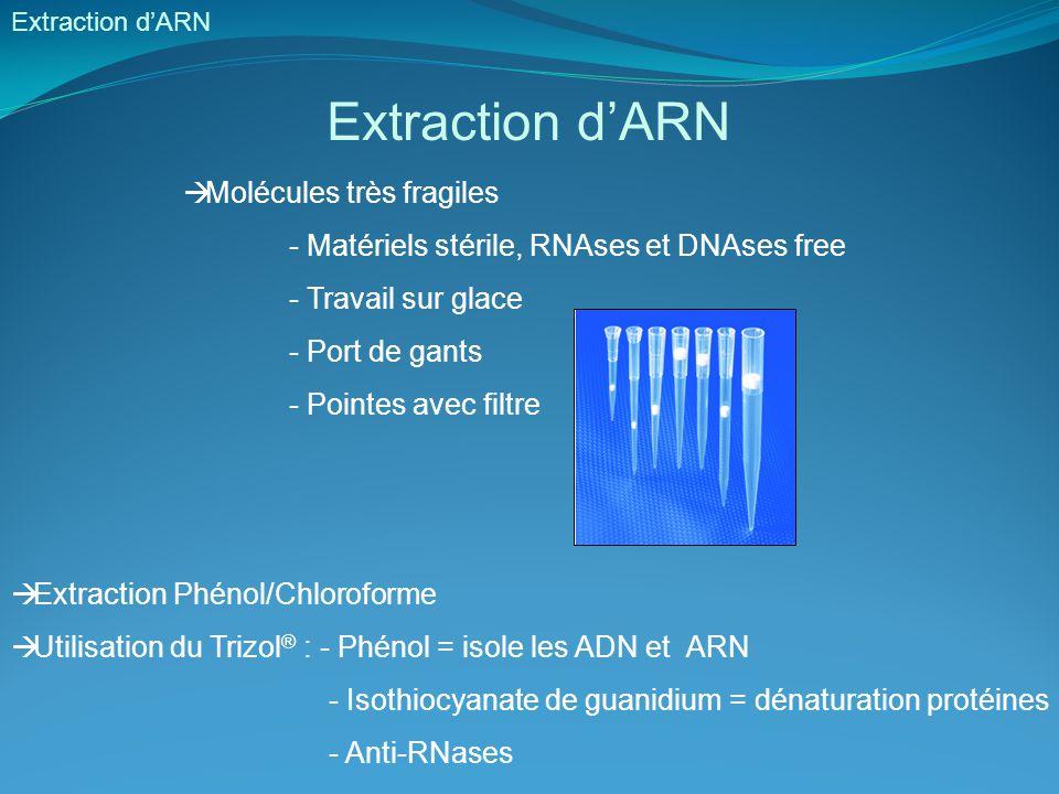 Extraction d'ARN  Molécules très fragiles - Matériels stérile, RNAses et DNAses free - Travail sur glace - Port de gants - Pointes avec filtre  Extr
