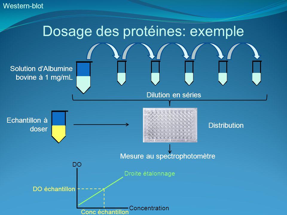 Résultats Gel retard Extraits nucléaires de cellules Hela Inconvénients: - Extraction de protéines nucléaires - Manipulation de la radioactivité