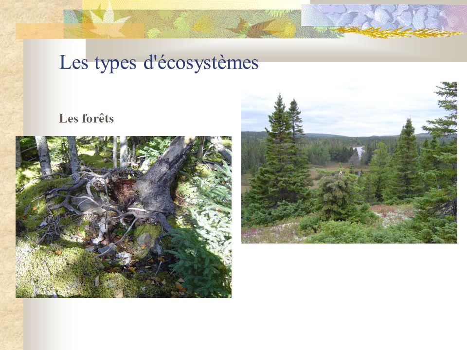 Les types d'écosystèmes Les forêts