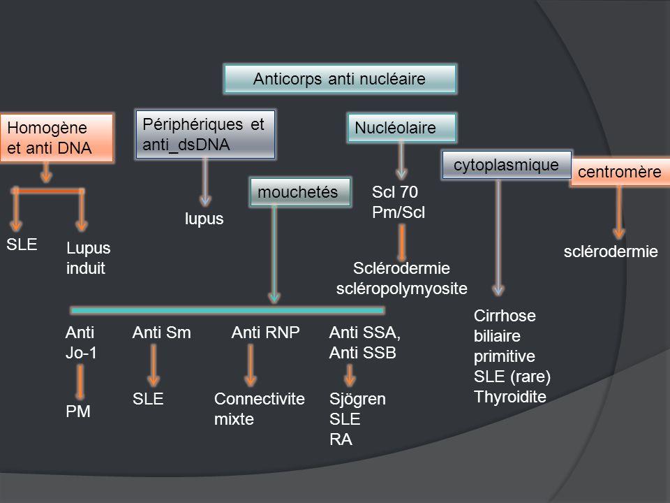 Anticorps anti nucléaire Homogène et anti DNA SLE Lupus induit Périphériques et anti_dsDNA mouchetés Nucléolaire centromère cytoplasmique Sclérodermie scléropolymyosite sclérodermie lupus Anti SmAnti RNPAnti SSA, Anti SSB SLEConnectivite mixte Sjögren SLE RA Cirrhose biliaire primitive SLE (rare) Thyroidite Anti Jo-1 PM Scl 70 Pm/Scl