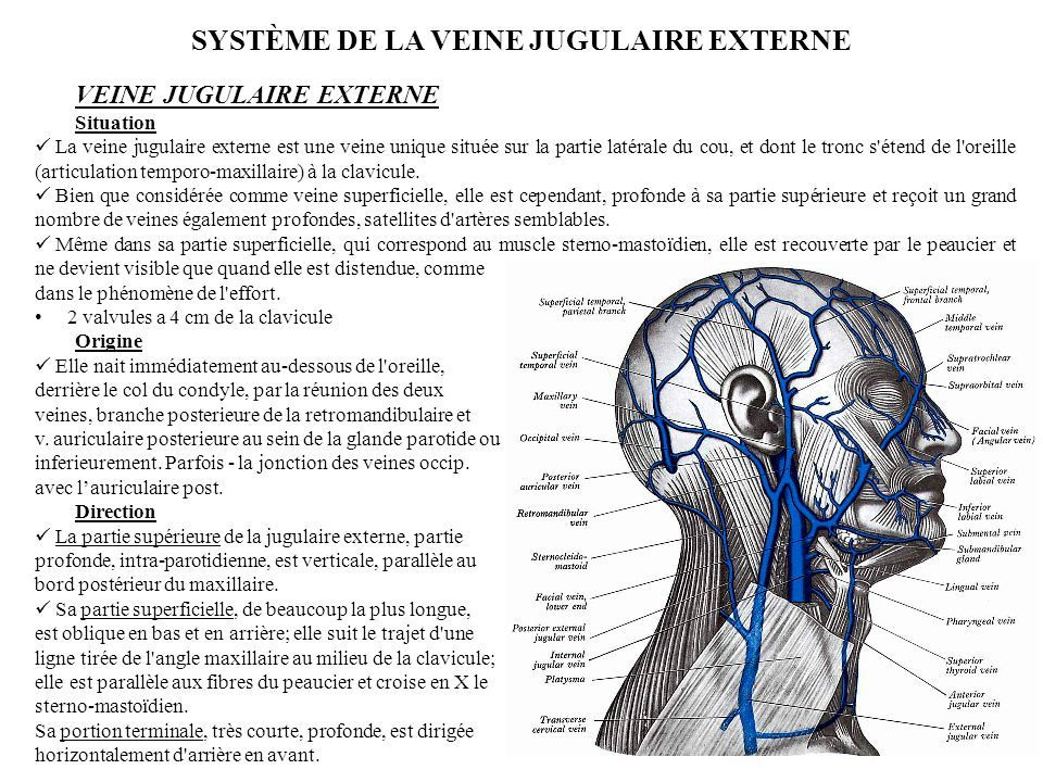veines jugulaires internes