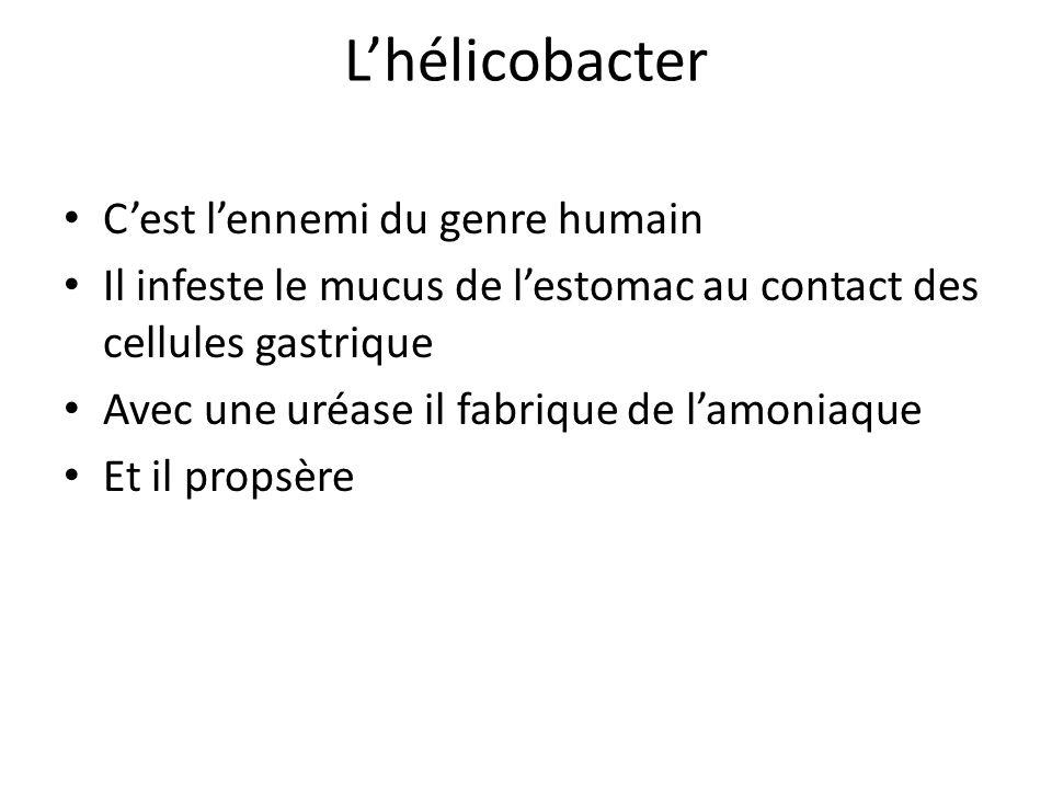 L'hélicobacter C'est l'ennemi du genre humain Il infeste le mucus de l'estomac au contact des cellules gastrique Avec une uréase il fabrique de l'amon