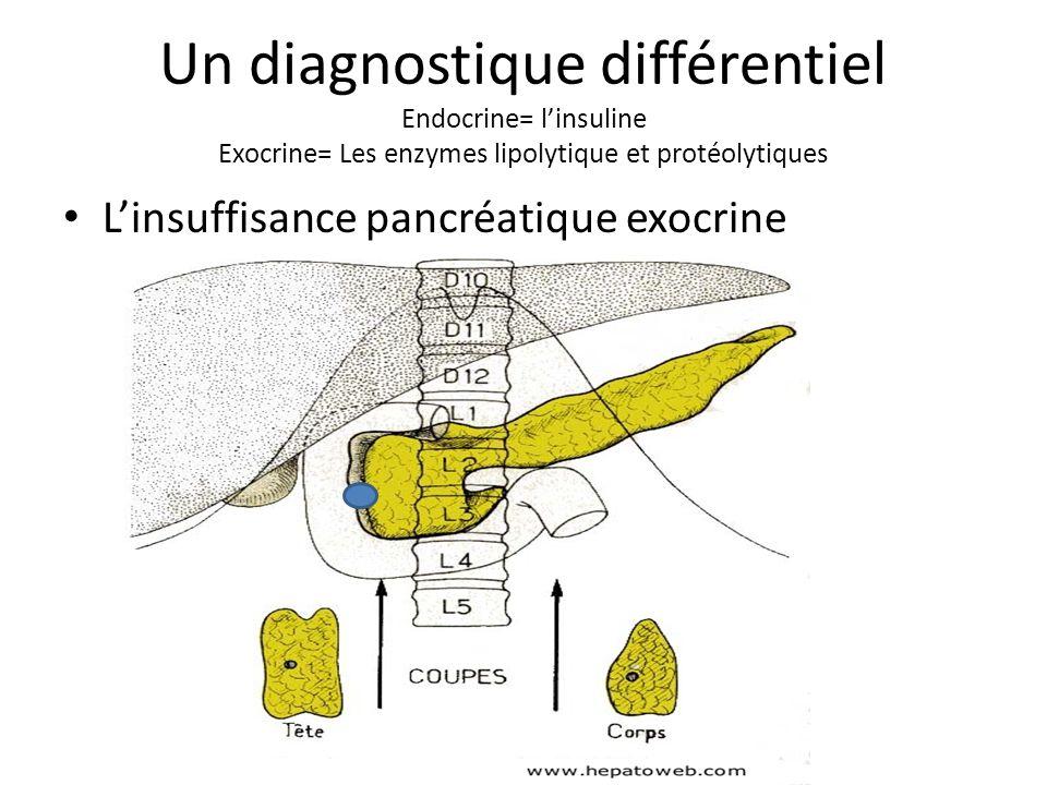 Un diagnostique différentiel Endocrine= l'insuline Exocrine= Les enzymes lipolytique et protéolytiques L'insuffisance pancréatique exocrine