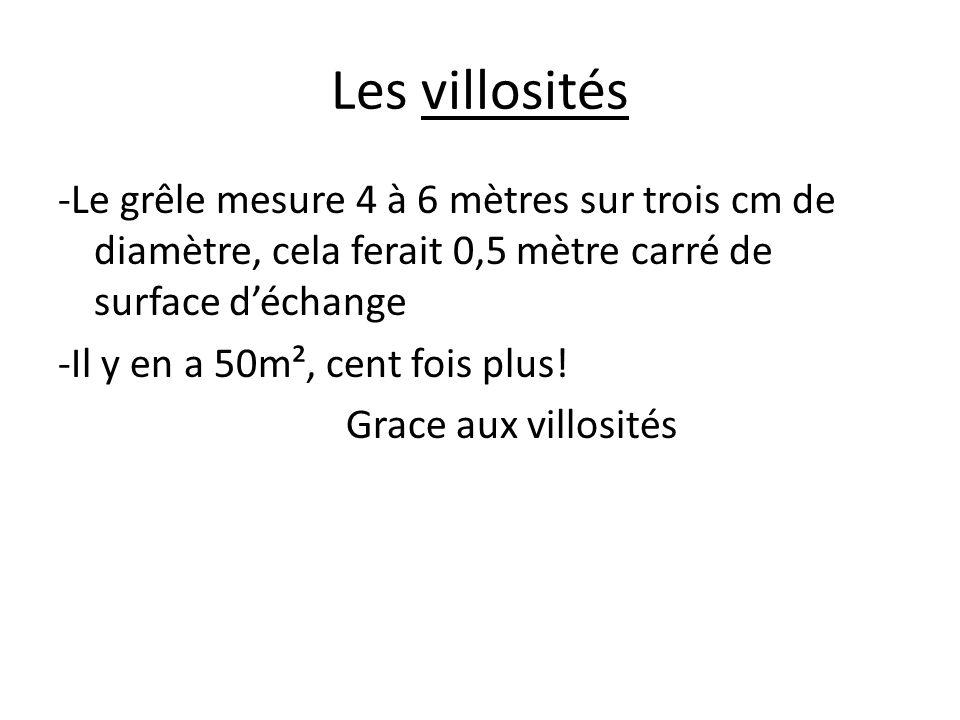 Les villosités -Le grêle mesure 4 à 6 mètres sur trois cm de diamètre, cela ferait 0,5 mètre carré de surface d'échange -Il y en a 50m², cent fois plu