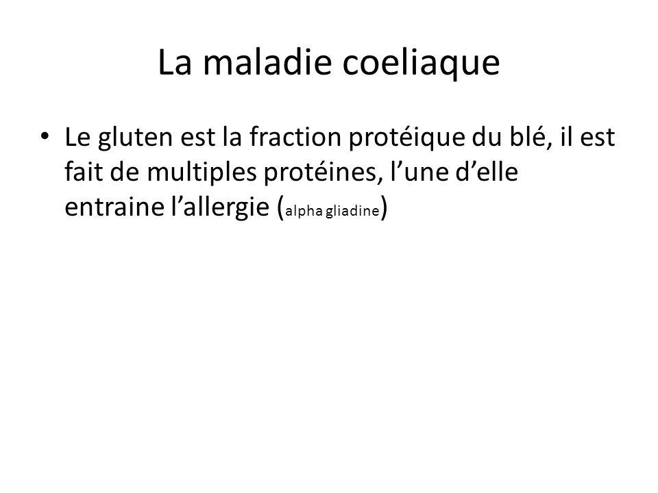 La maladie coeliaque Le gluten est la fraction protéique du blé, il est fait de multiples protéines, l'une d'elle entraine l'allergie ( alpha gliadine