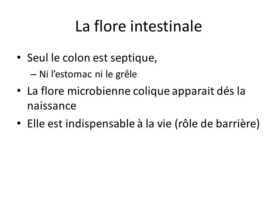 La flore intestinale Seul le colon est septique, – Ni l'estomac ni le grêle La flore microbienne colique apparait dés la naissance Elle est indispensa
