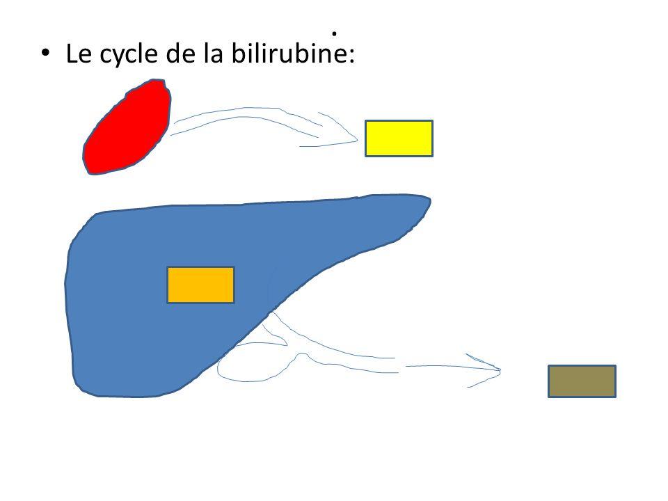. Le cycle de la bilirubine: