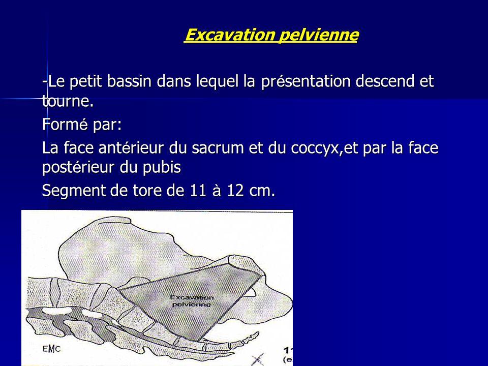 Excavation pelvienne Excavation pelvienne -Le petit bassin dans lequel la pr é sentation descend et tourne. Form é par: La face ant é rieur du sacrum
