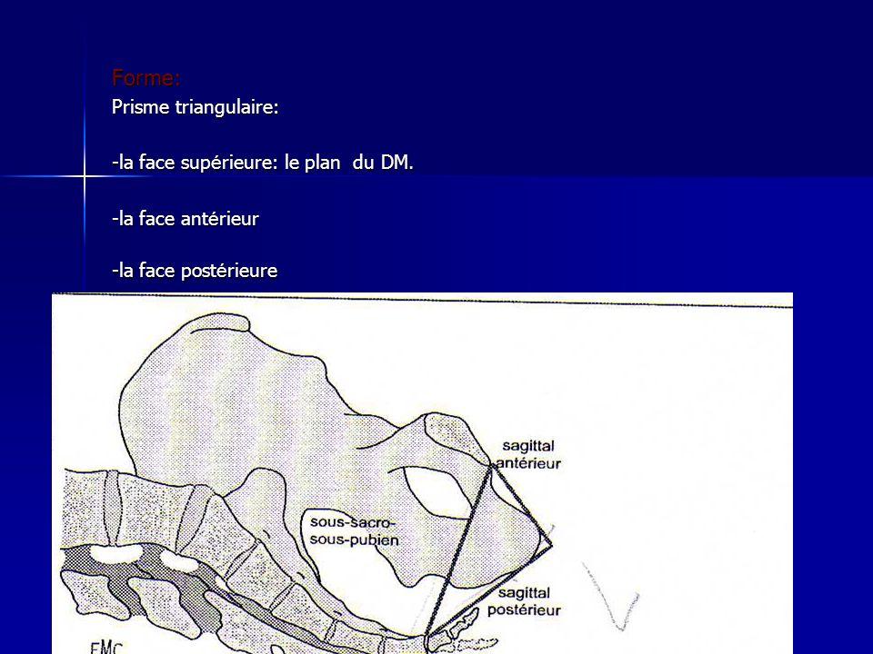 Forme: Prisme triangulaire: -la face sup é rieure: le plan du DM. -la face ant é rieur -la face post é rieure