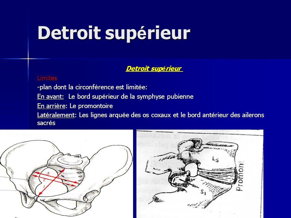 Detroit sup é rieur Limites -plan dont la circonf é rence est limit é e: En avant: Le bord sup é rieur de la symphyse pubienne En arri è re: Le promon