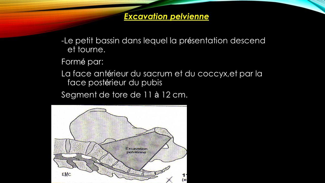 Excavation pelvienne -Le petit bassin dans lequel la pr é sentation descend et tourne. Form é par: La face ant é rieur du sacrum et du coccyx,et par l