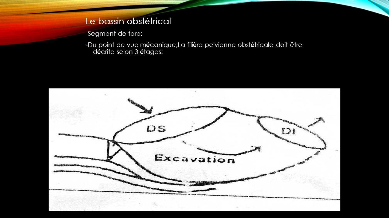 Le bassin obst é trical -Segment de tore: -Du point de vue m é canique;La fili è re pelvienne obst é tricale doit être d é crite selon 3 é tages: