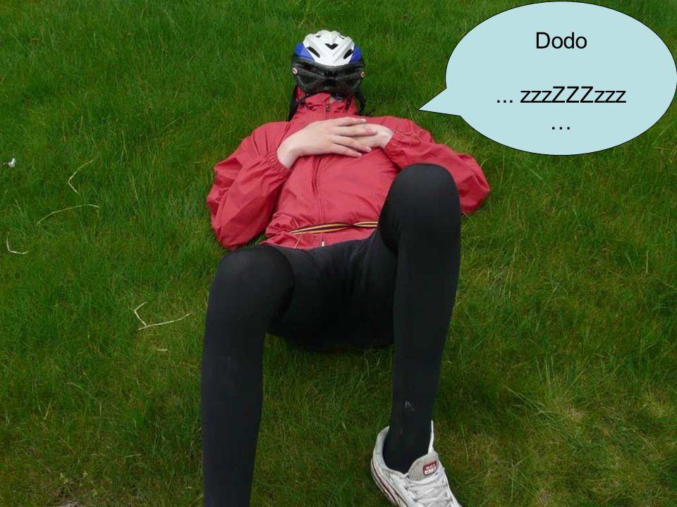 Dodo... zzzZZZzzz …