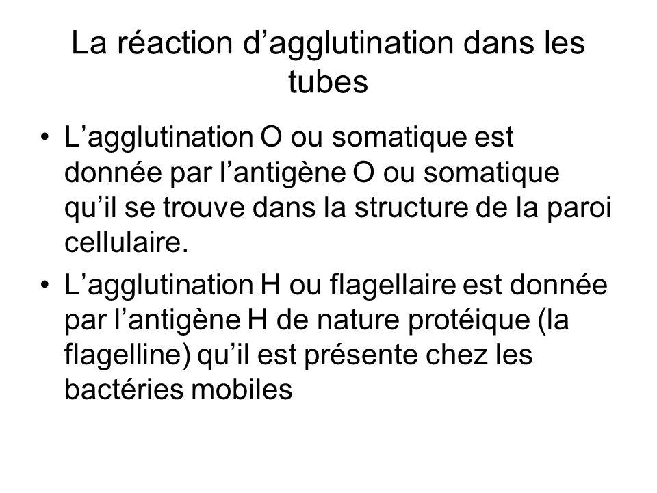 La réaction d'agglutination dans les tubes L'agglutination O ou somatique est donnée par l'antigène O ou somatique qu'il se trouve dans la structure d