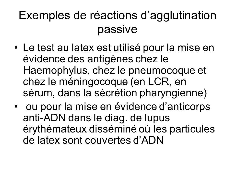 Exemples de réactions d'agglutination passive Le test au latex est utilisé pour la mise en évidence des antigènes chez le Haemophylus, chez le pneumoc