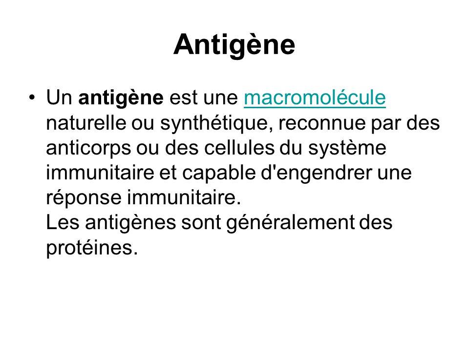 Antigène Un antigène est une macromolécule naturelle ou synthétique, reconnue par des anticorps ou des cellules du système immunitaire et capable d'en