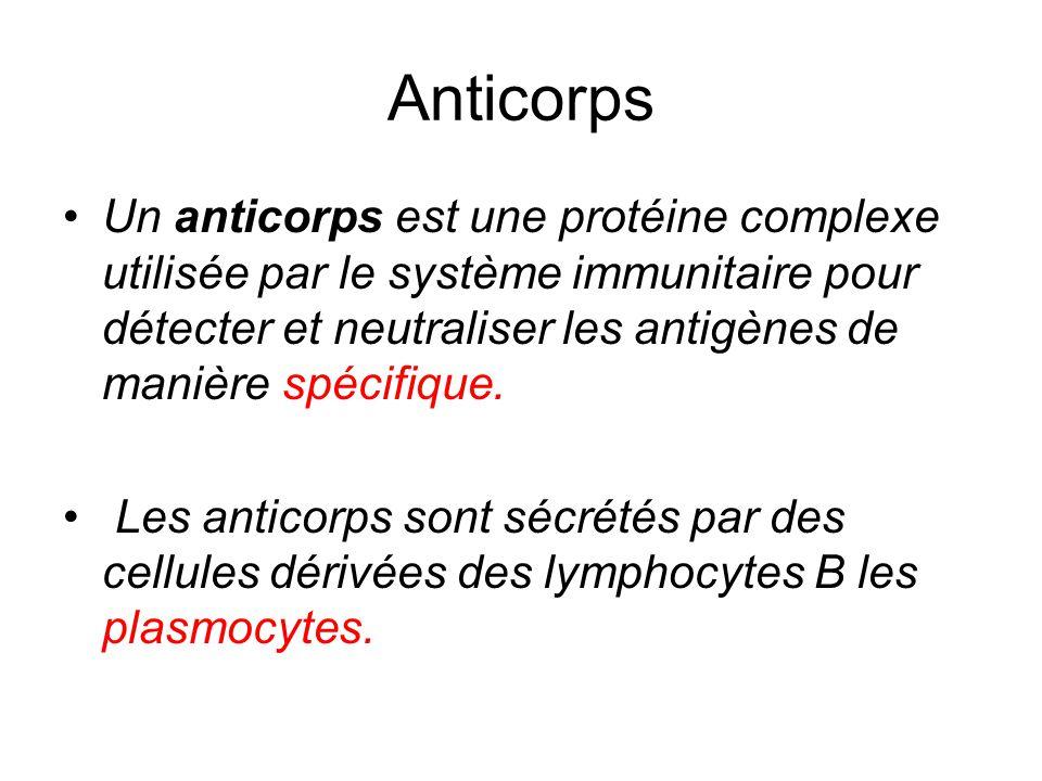 Anticorps Un anticorps est une protéine complexe utilisée par le système immunitaire pour détecter et neutraliser les antigènes de manière spécifique.
