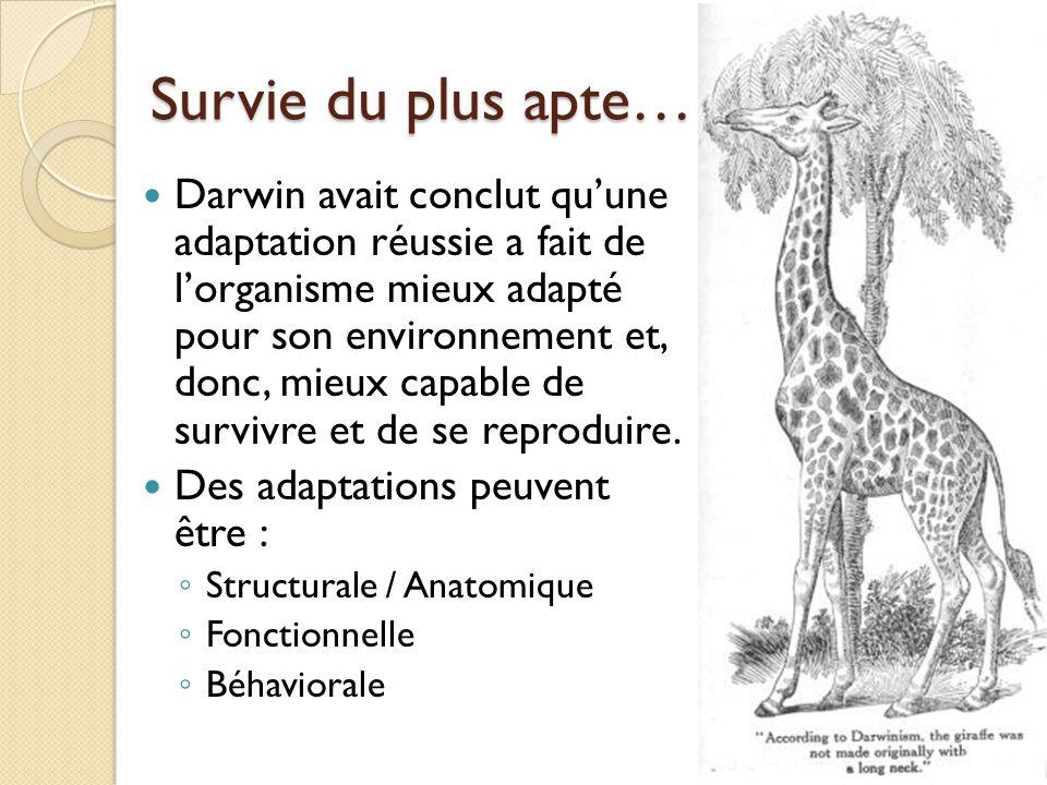 Survie du plus apte… Darwin avait conclut qu'une adaptation réussie a fait de l'organisme mieux adapté pour son environnement et, donc, mieux capable