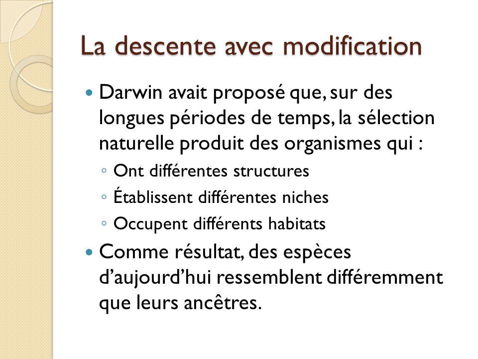 La descente avec modification Darwin avait proposé que, sur des longues périodes de temps, la sélection naturelle produit des organismes qui : ◦ Ont d