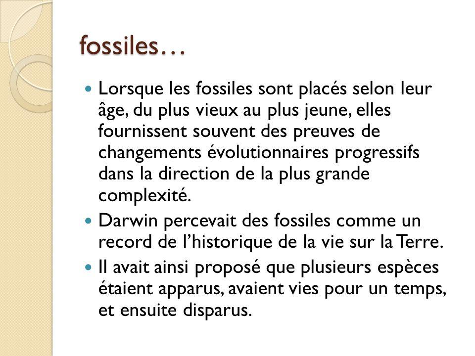 fossiles… Lorsque les fossiles sont placés selon leur âge, du plus vieux au plus jeune, elles fournissent souvent des preuves de changements évolution