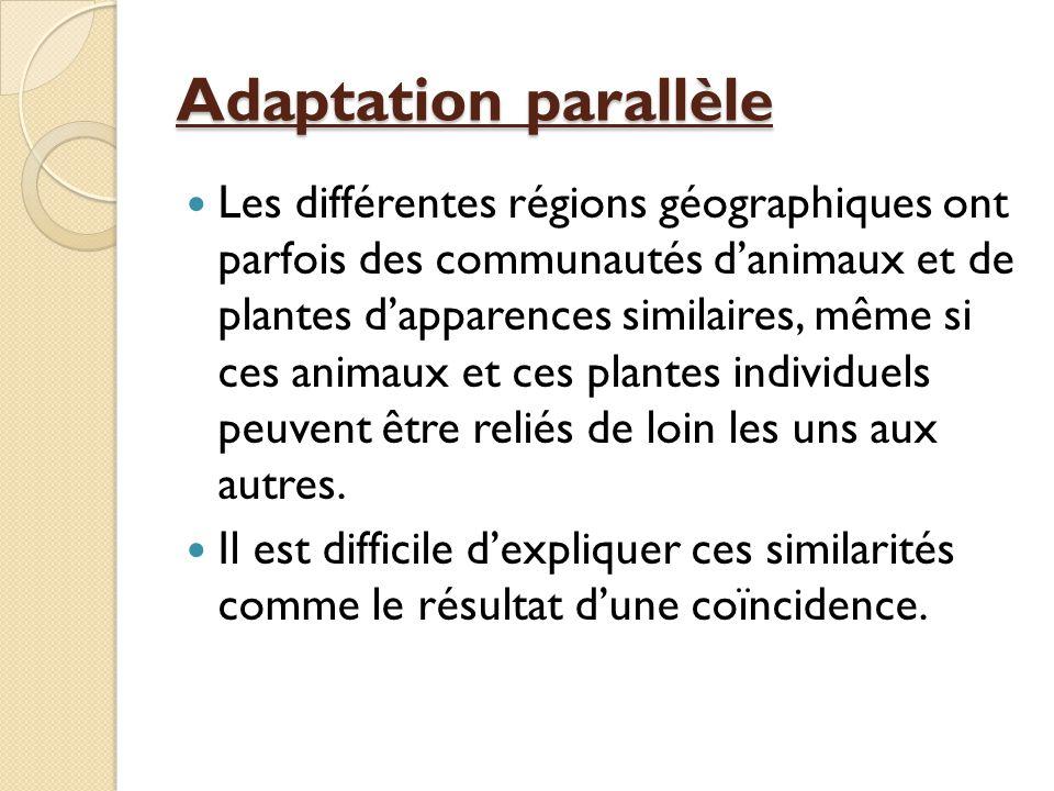 Adaptation parallèle Les différentes régions géographiques ont parfois des communautés d'animaux et de plantes d'apparences similaires, même si ces an