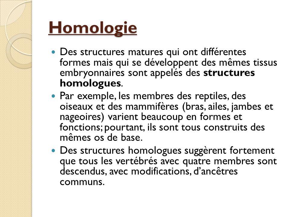Homologie Des structures matures qui ont différentes formes mais qui se développent des mêmes tissus embryonnaires sont appelés des structures homolog