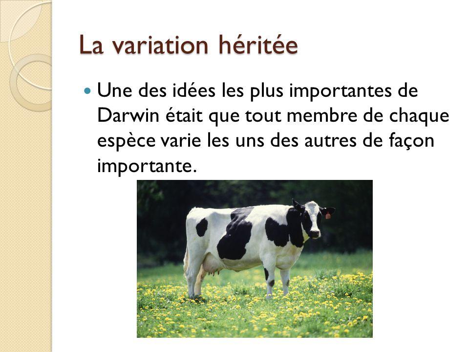 La sélection artificielle Durant les voyages de Darwin, il a noté que les éleveurs de plantes et d'animaux utilisaient la variation héréditaire (ce qu'on appelle maintenant la variation génétique) pour améliorer les cultures végétales et le bétail.
