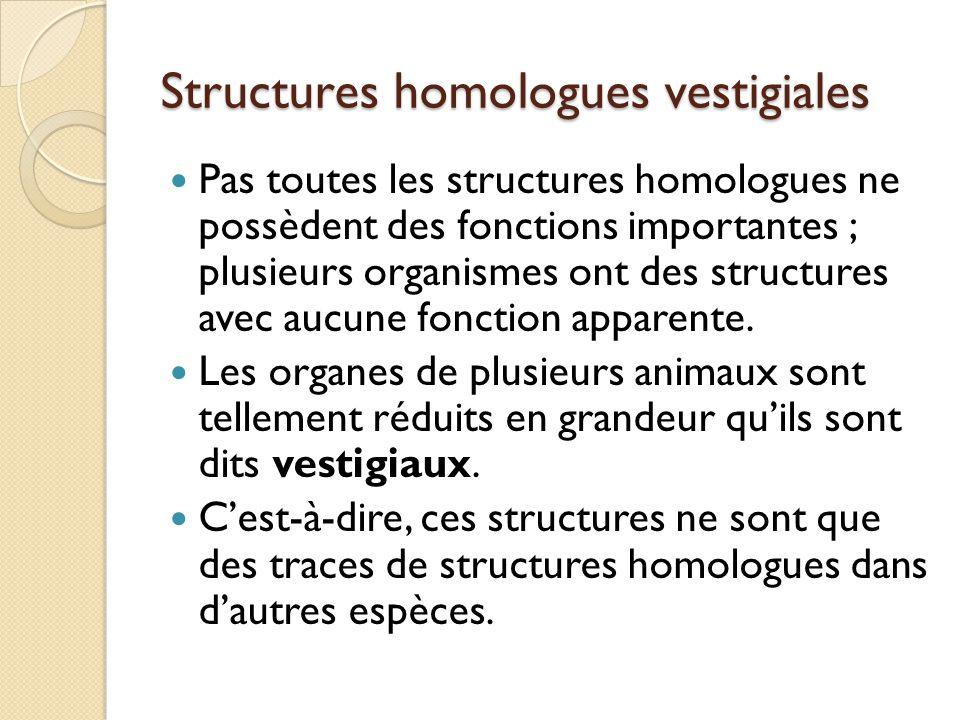 Structures homologues vestigiales Pas toutes les structures homologues ne possèdent des fonctions importantes ; plusieurs organismes ont des structure