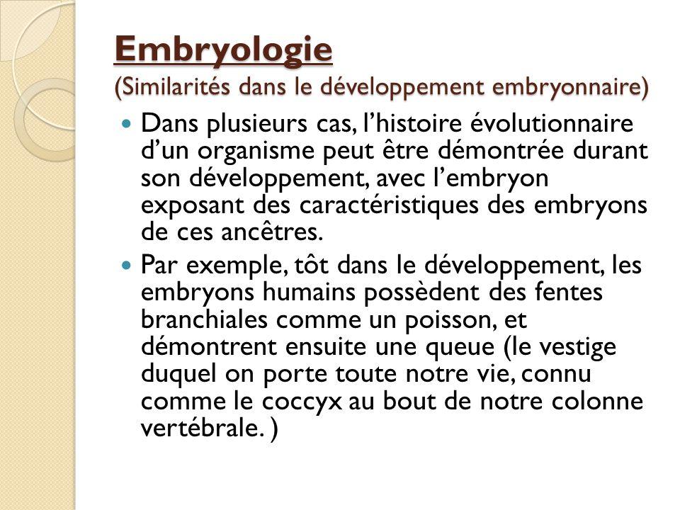 Embryologie (Similarités dans le développement embryonnaire) Dans plusieurs cas, l'histoire évolutionnaire d'un organisme peut être démontrée durant s