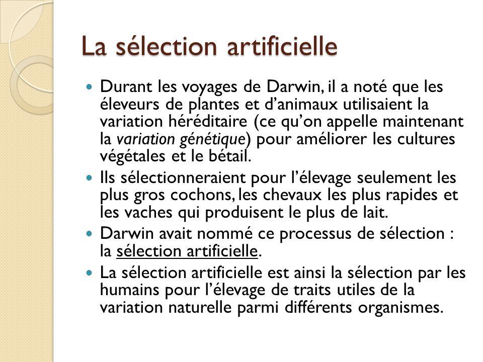 Descente… Donc, chaque espèce vivante a descendu avec des changements d'une autre espèce avec le temps.