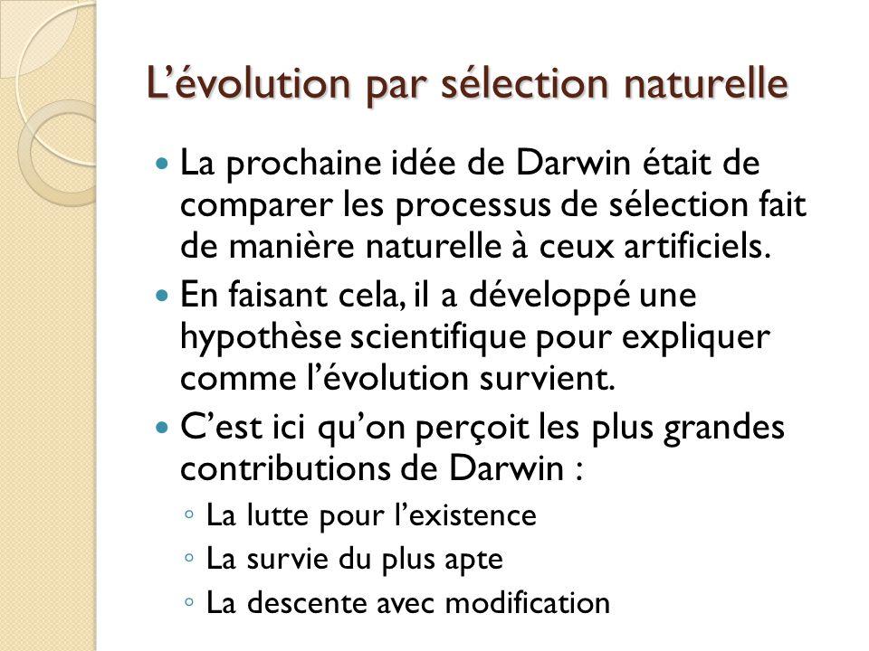 L'évolution par sélection naturelle La prochaine idée de Darwin était de comparer les processus de sélection fait de manière naturelle à ceux artifici