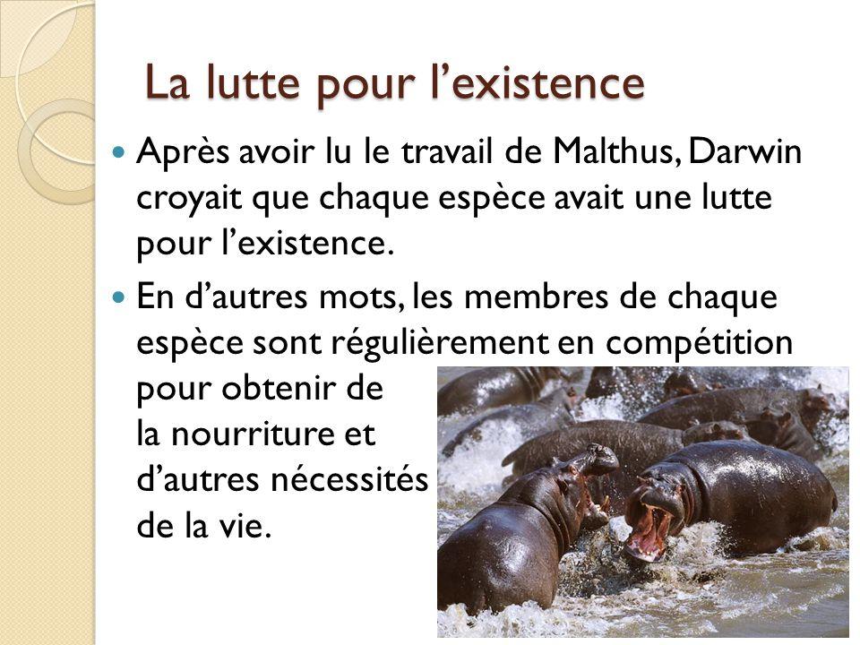 La lutte pour l'existence Après avoir lu le travail de Malthus, Darwin croyait que chaque espèce avait une lutte pour l'existence. En d'autres mots, l