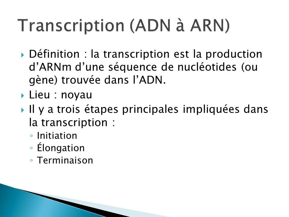  Définition : la transcription est la production d'ARNm d'une séquence de nucléotides (ou gène) trouvée dans l'ADN.  Lieu : noyau  Il y a trois éta