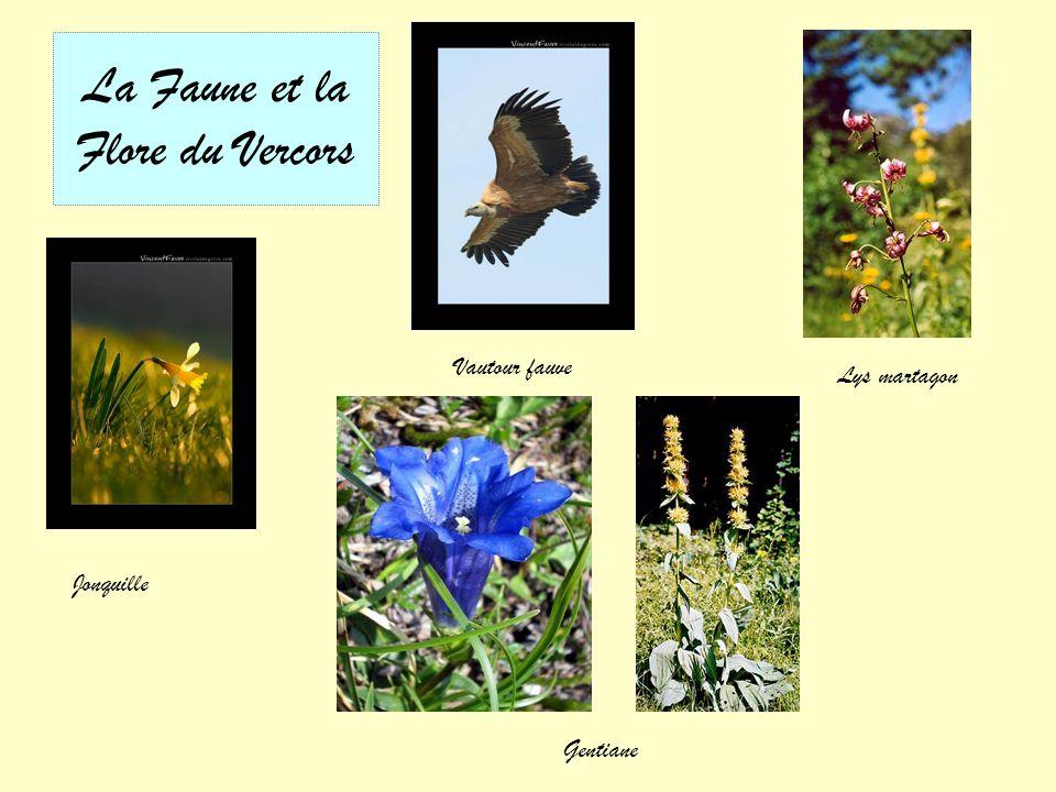 Saint Nazaire en Royans et ses maisons suspendues
