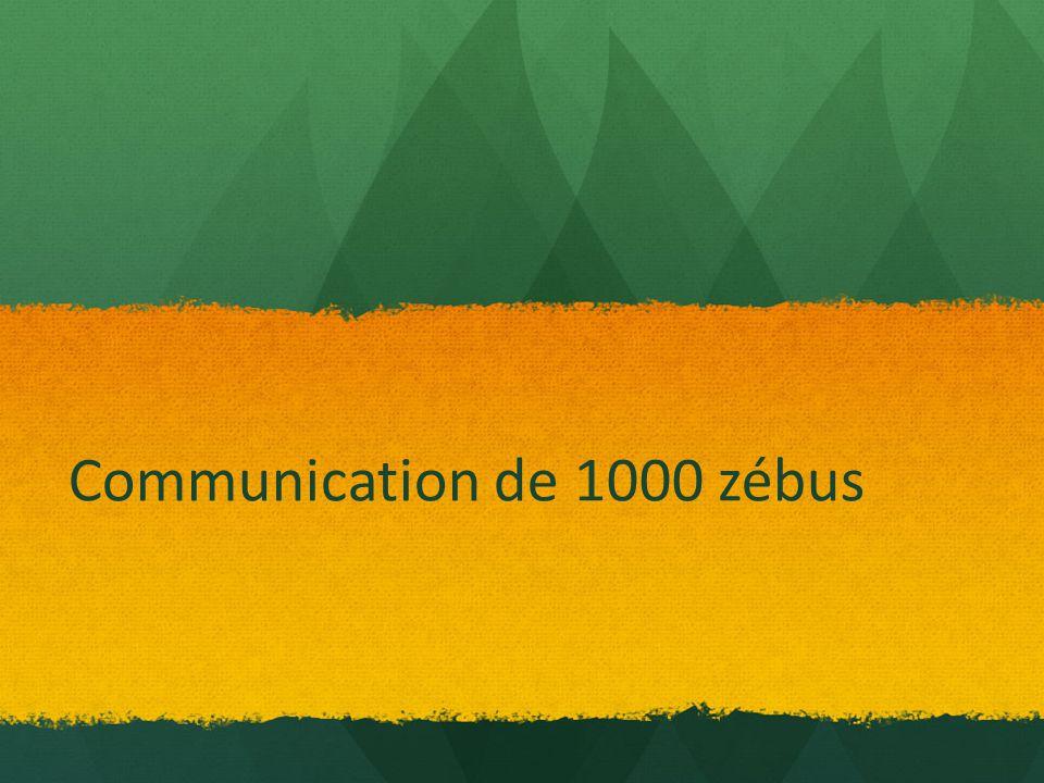 Communication de 1000 zébus