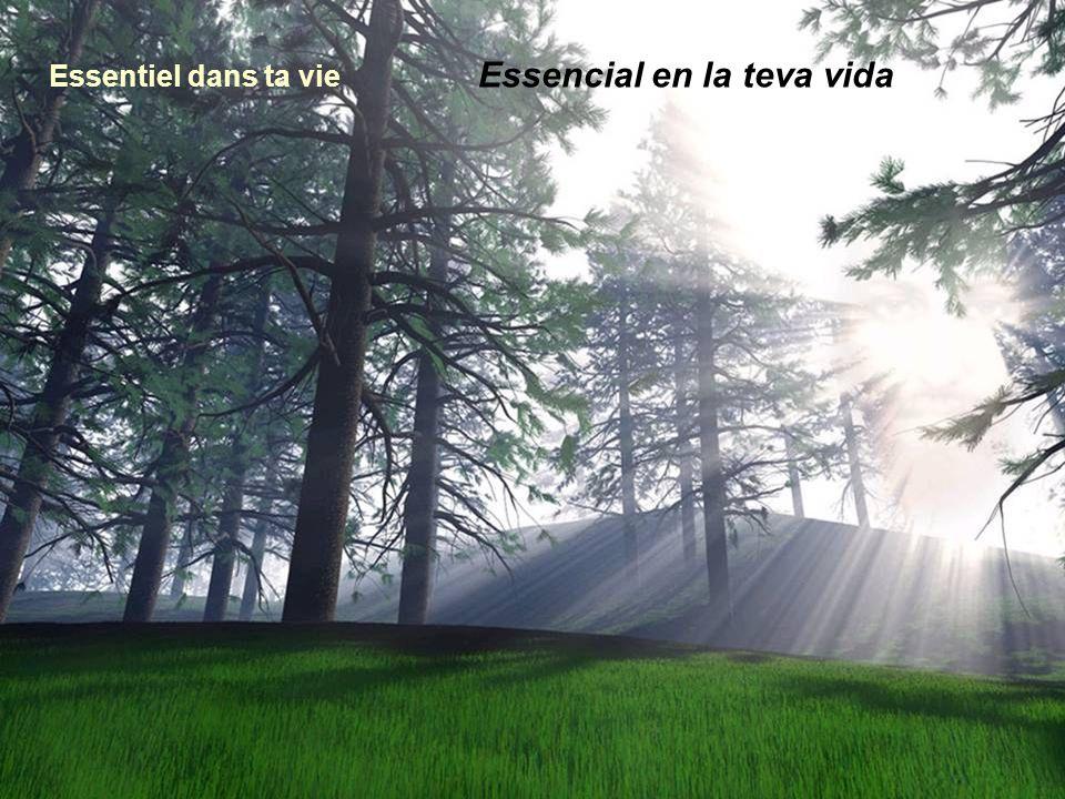 Essentiel dans ta vie Essencial en la teva vida