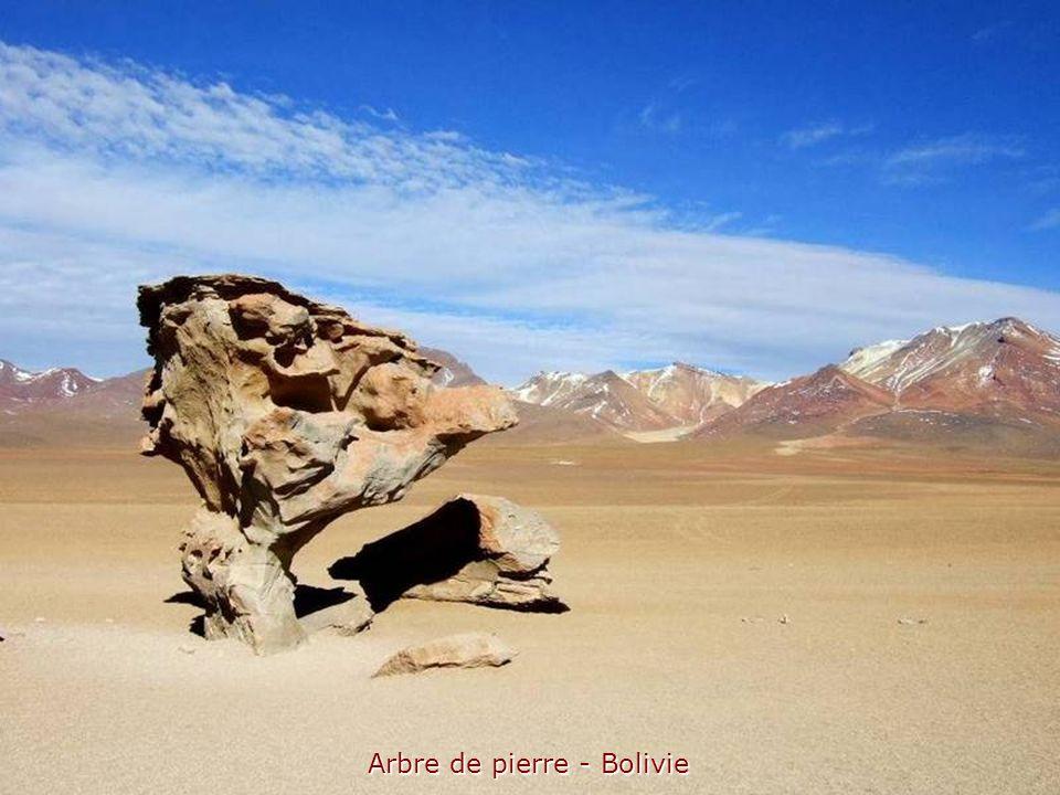 Arbre de pierre - Bolivie