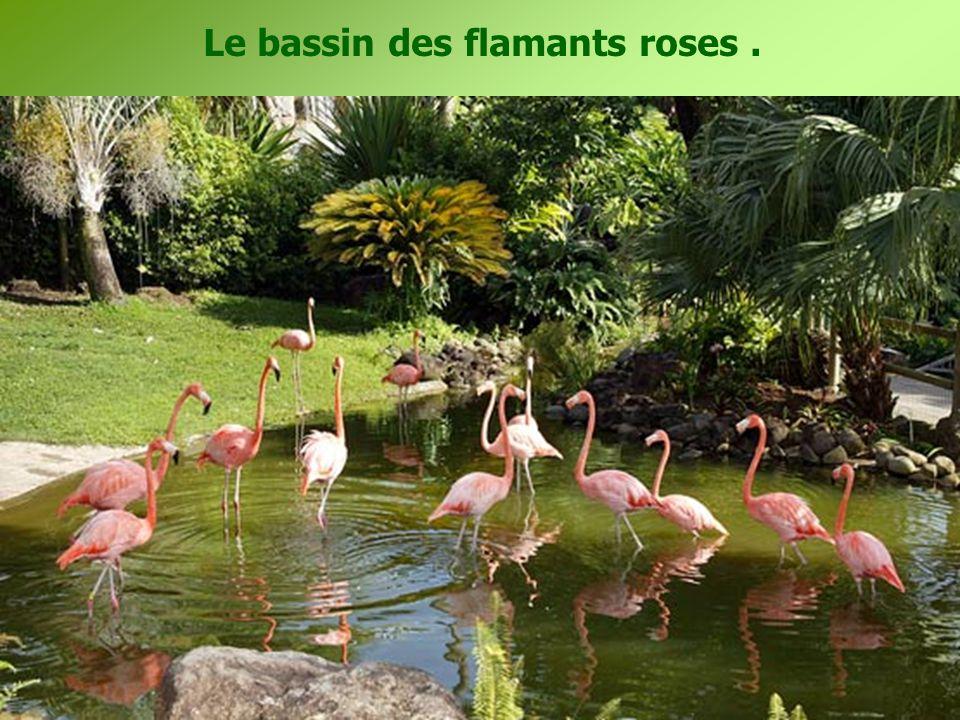 Le bassin des flamants roses.