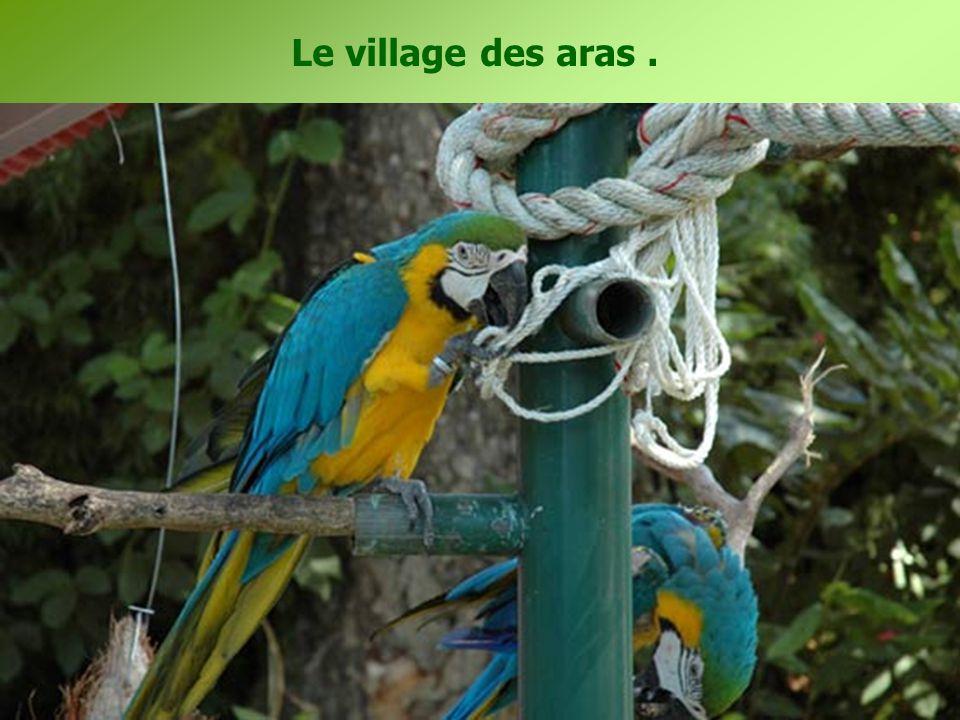 Le village des aras.