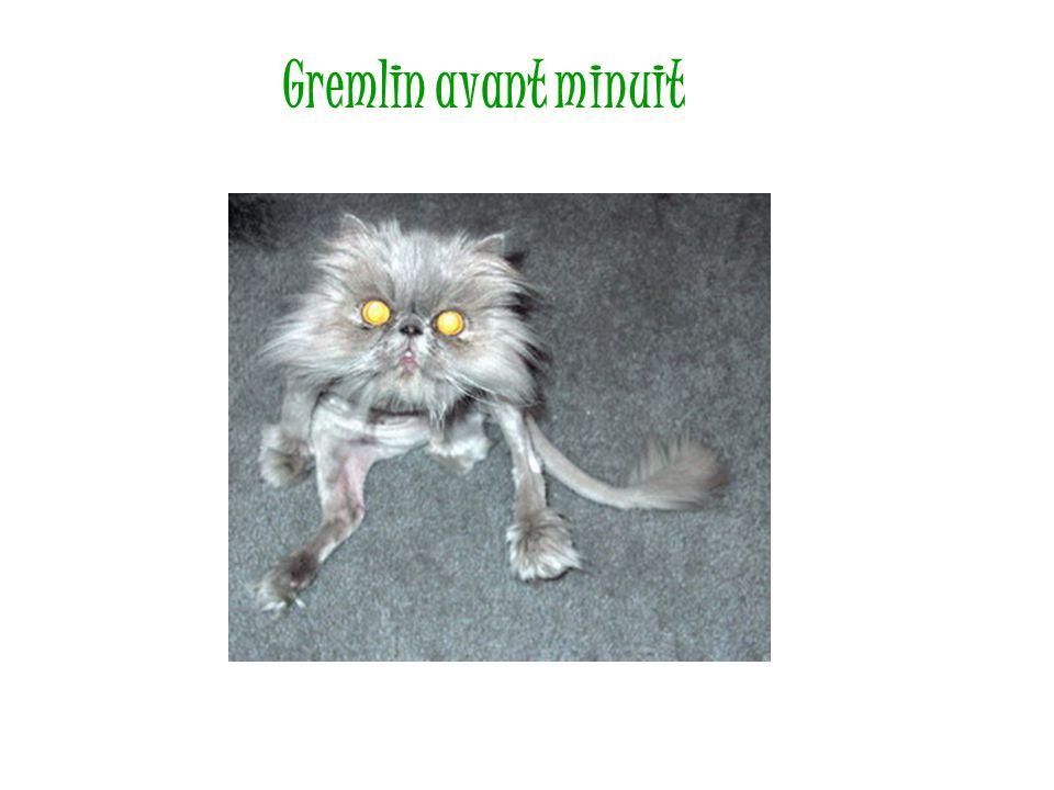 Gremlin avant minuit