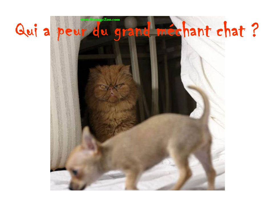 Qui a peur du grand méchant chat ?