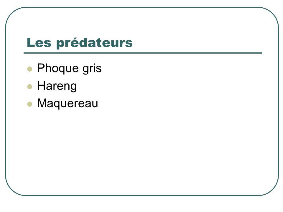Les prédateurs Phoque gris Hareng Maquereau