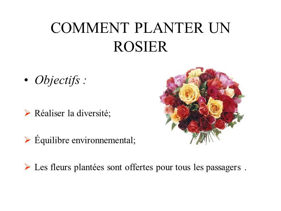 COMMENT PLANTER UN ROSIER Objectifs :  Réaliser la diversité;  Équilibre environnemental;  Les fleurs plantées sont offertes pour tous les passagers.